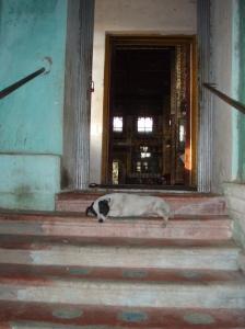 This drowsing dog captures my sense  Bago pagoda burnout